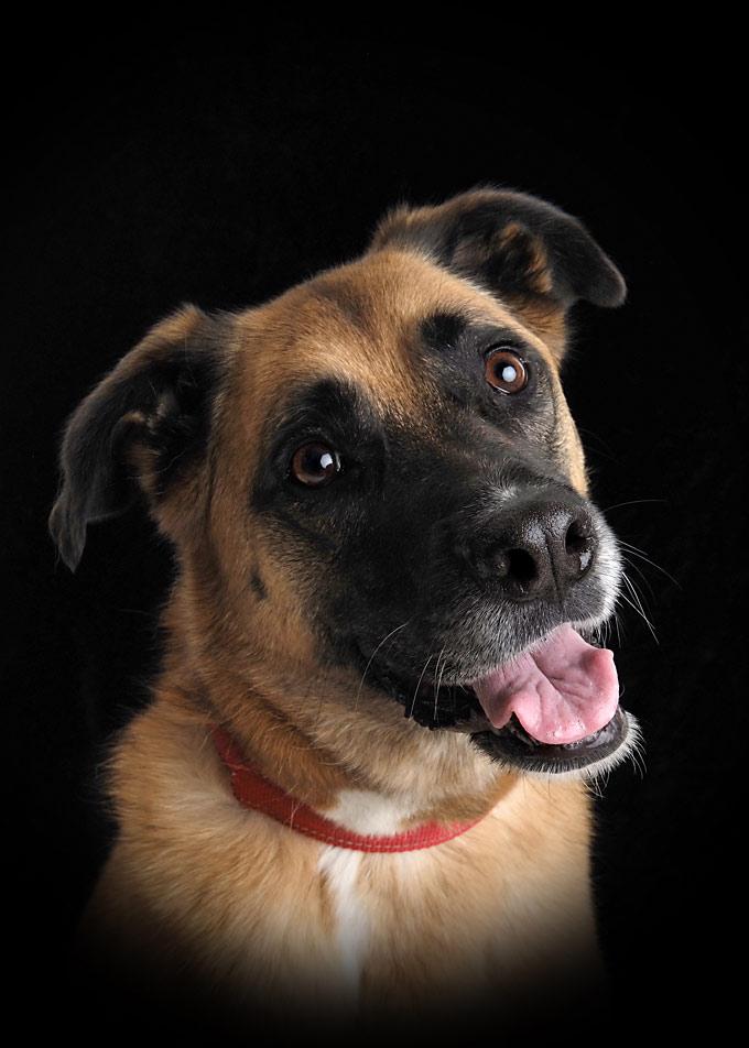 Pet portraits with black background