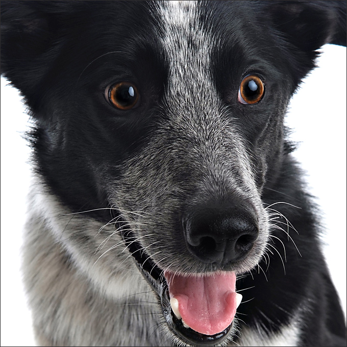 Pet portraits with great expression by Sammy Southall